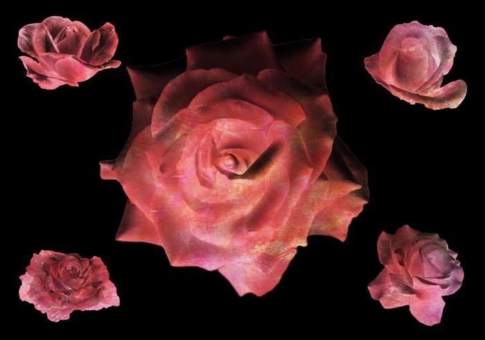 Rose Flower Brushes