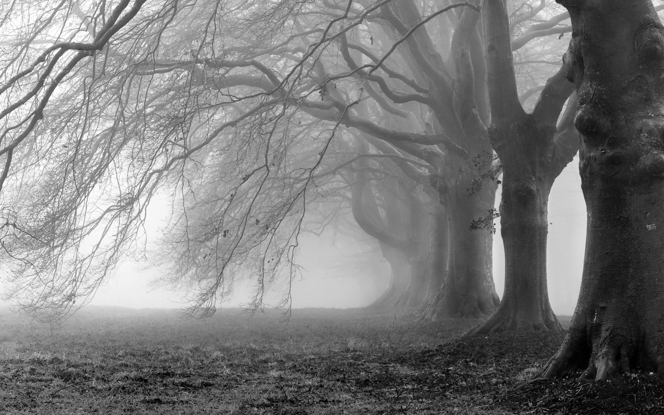 Creepy Trees Fog Background