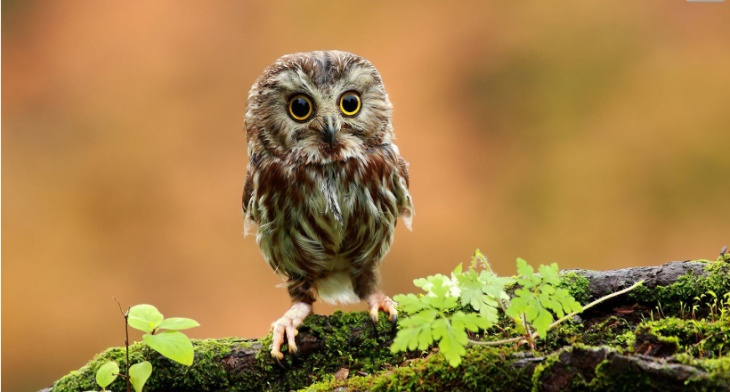 25 Owl Wallpapers Backgrounds Imagespictures Design