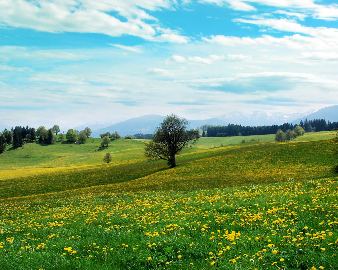 spring fields background