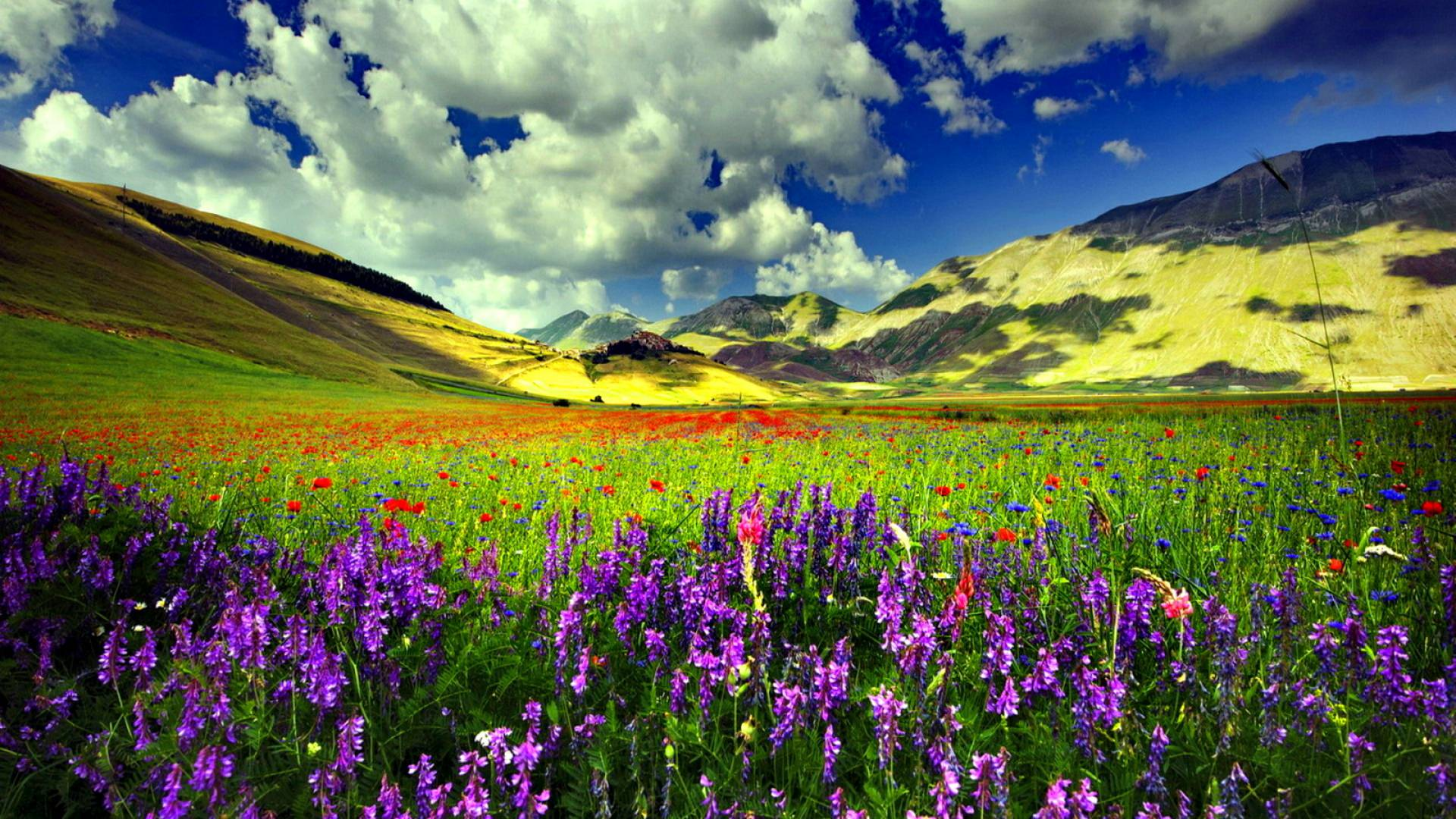 colourful spring background
