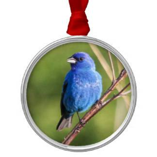 indigo_bunting_round_metal_christmas_ornament-r30560629497a4a49be6897af47d0d03b_x7s2s_8byvr_324