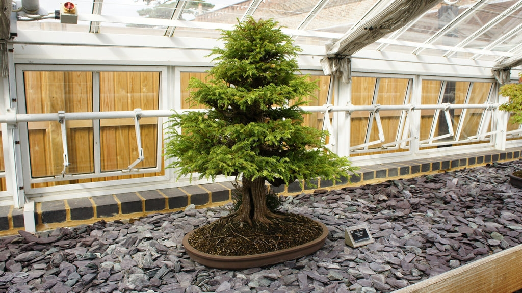 Single Tree Indoor gardening Design