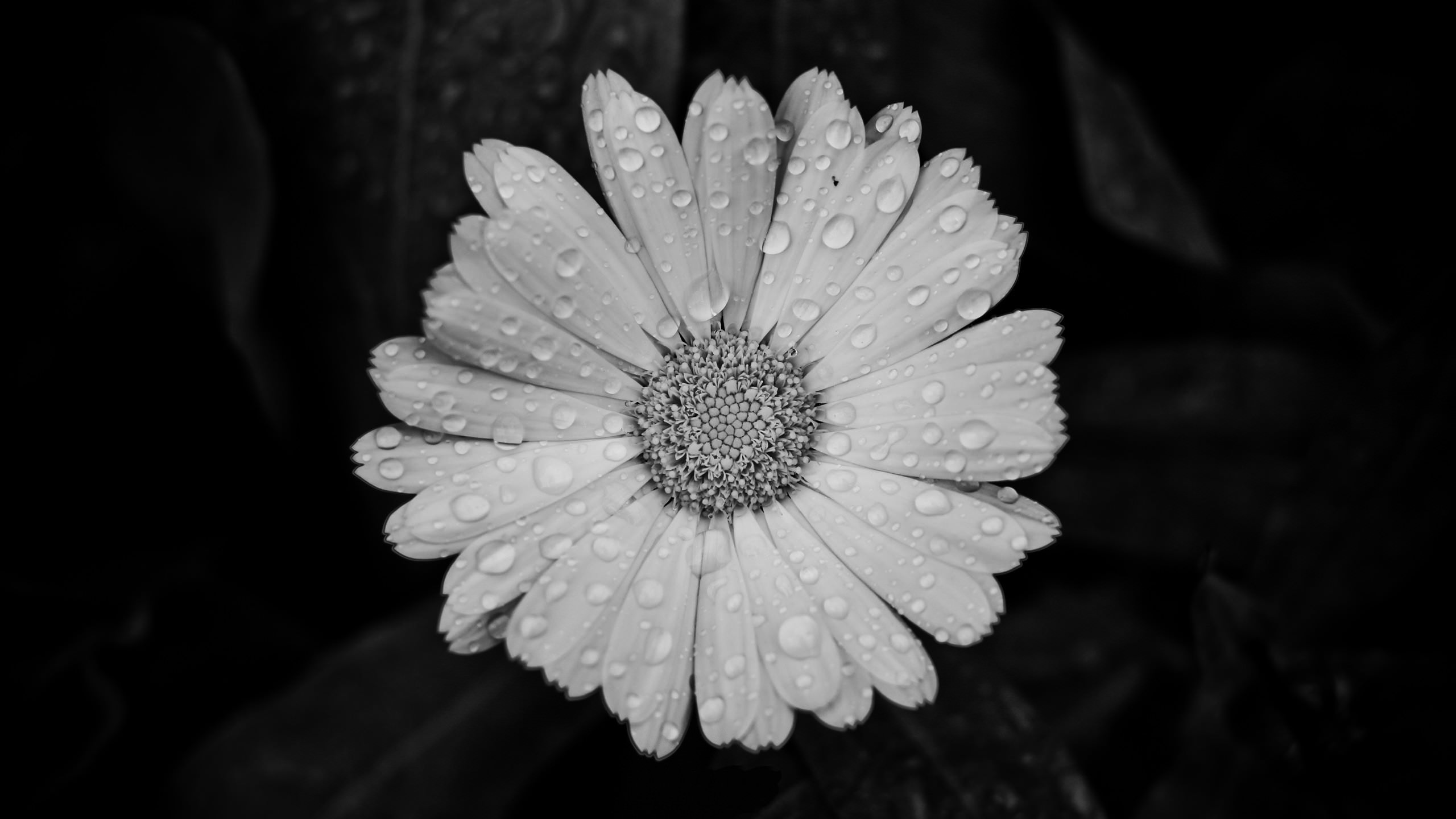 black and white floral background1