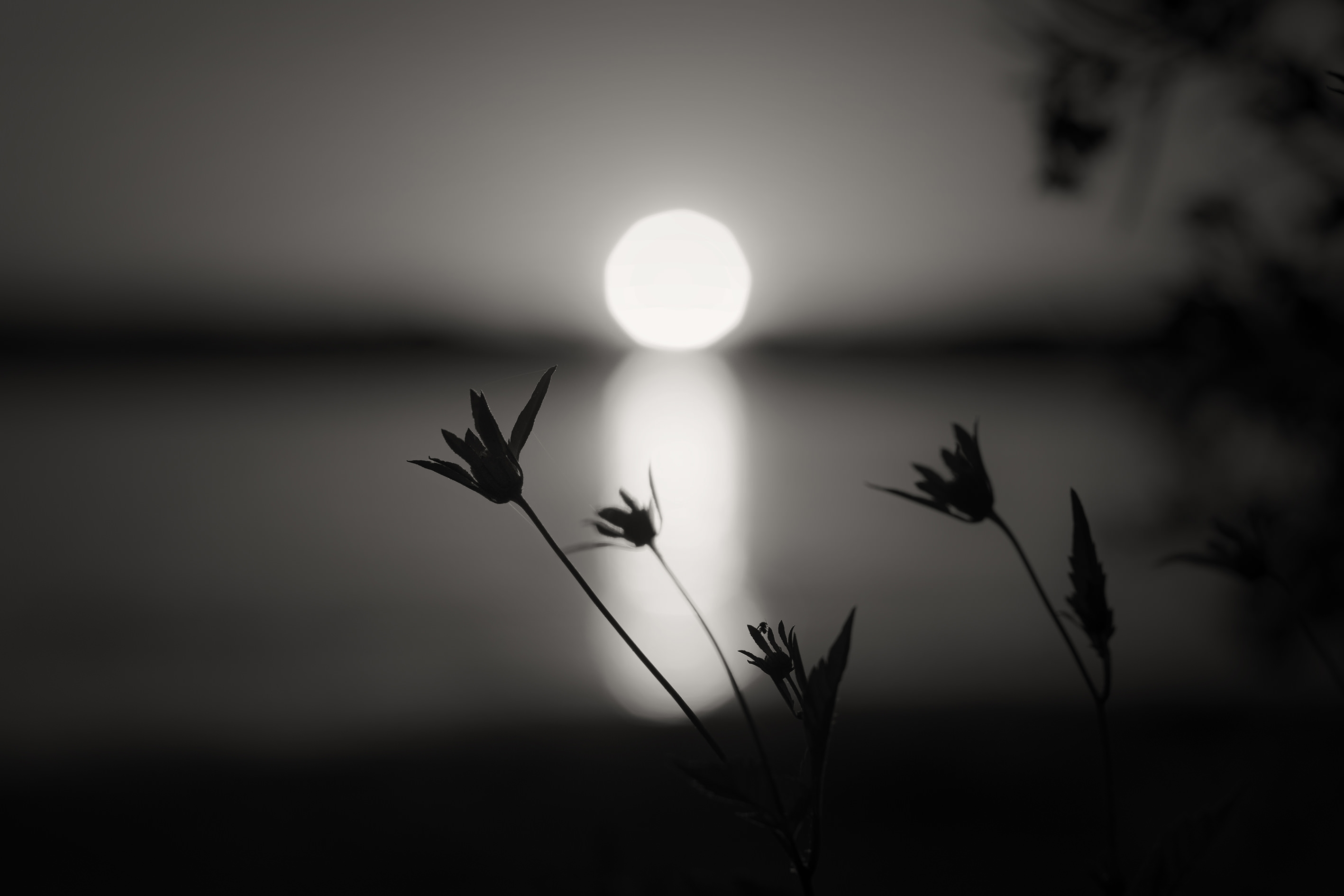 black and white sun reflection background