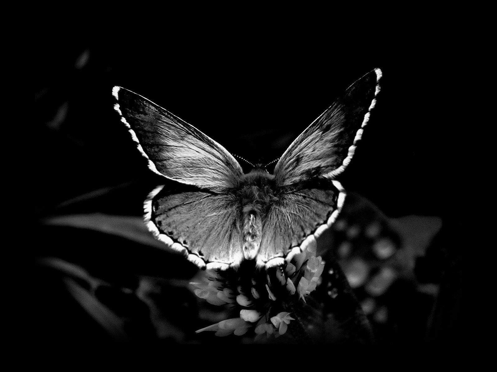 awesome butterfly wings background