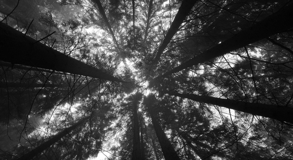 Black and White Forest Background1