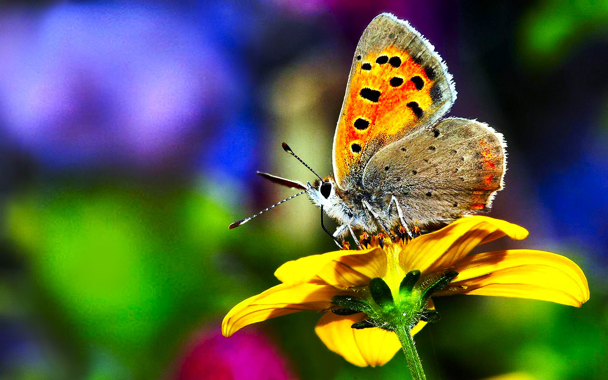 butterfly on flower background
