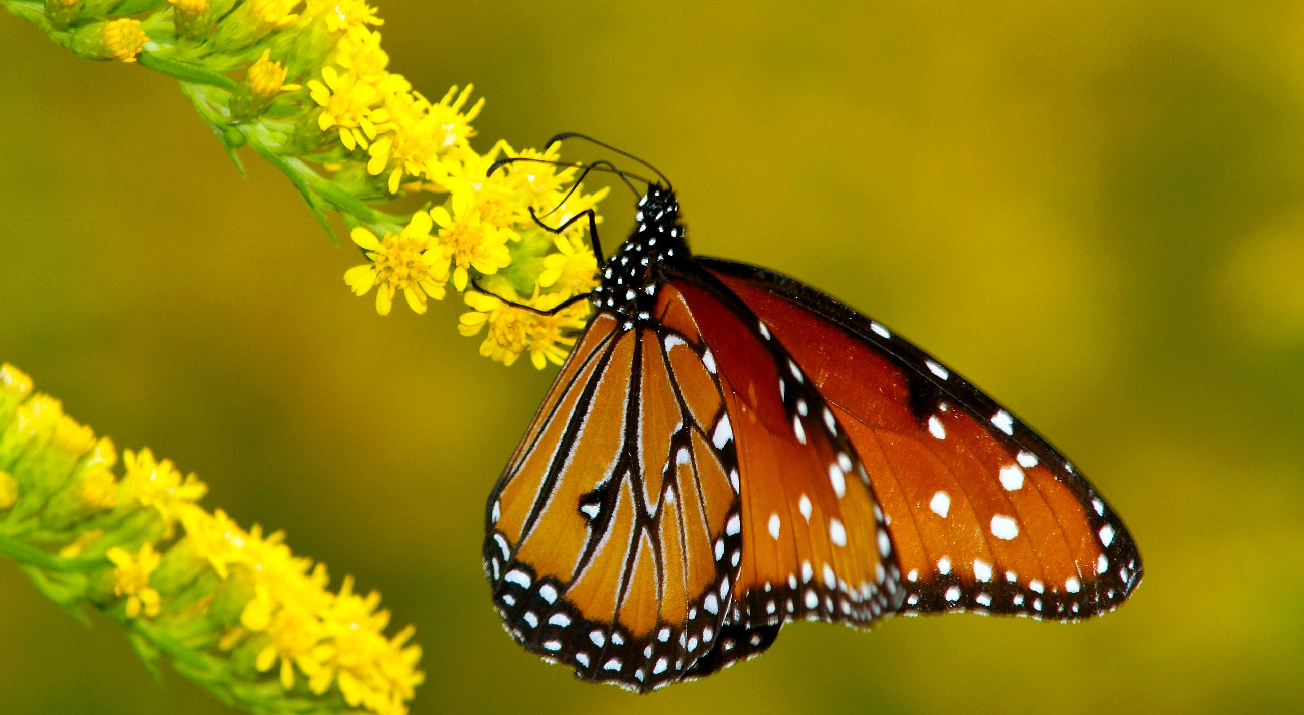Agile Butterflies Background