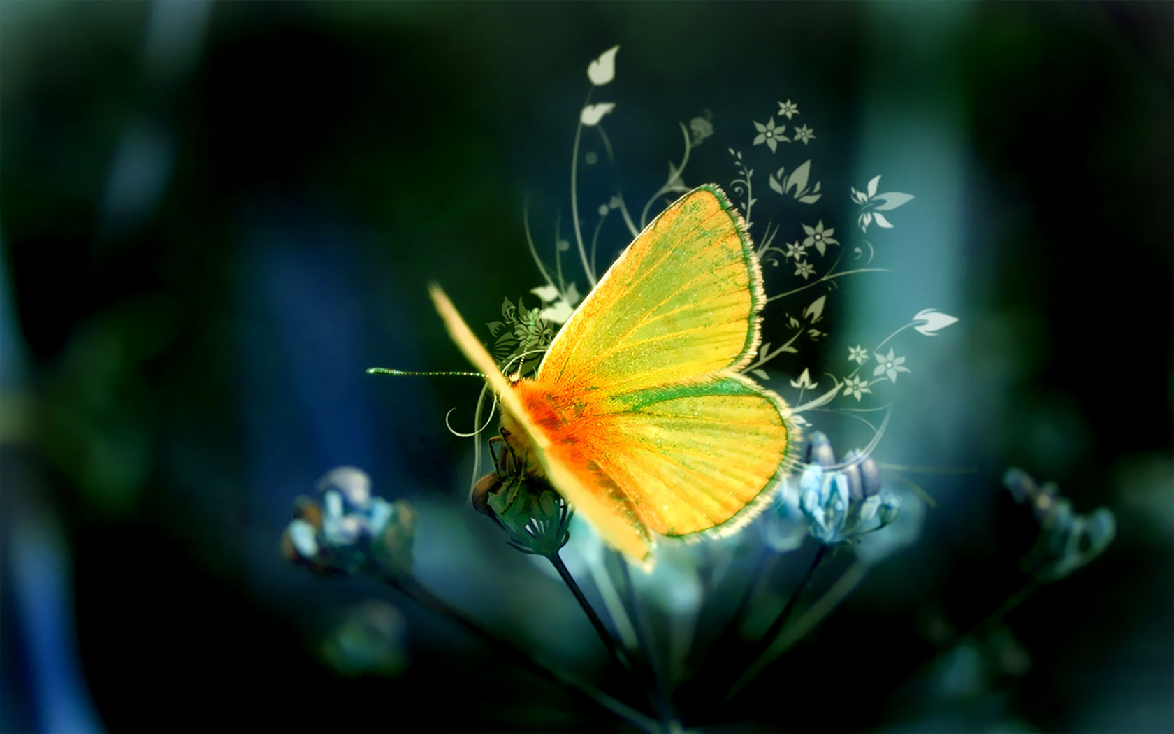 34 High Quality Butterfly Backgrounds