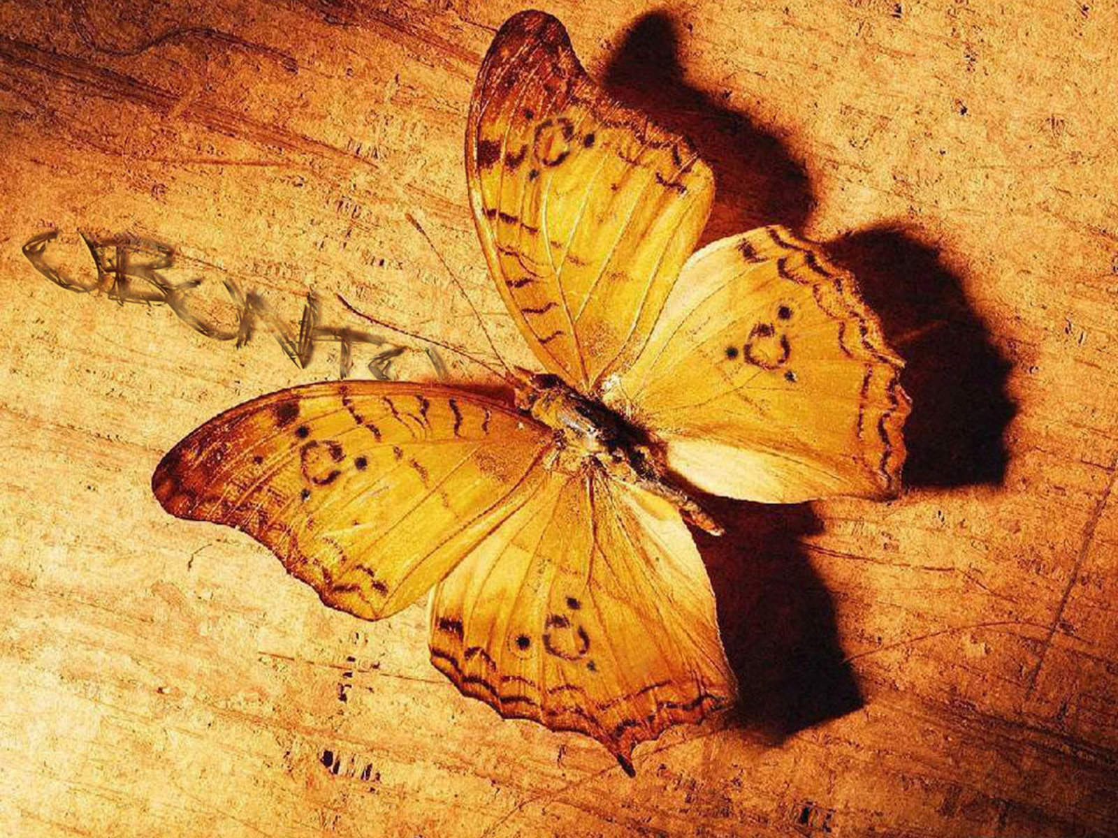 beautiful butterfly backgrounds