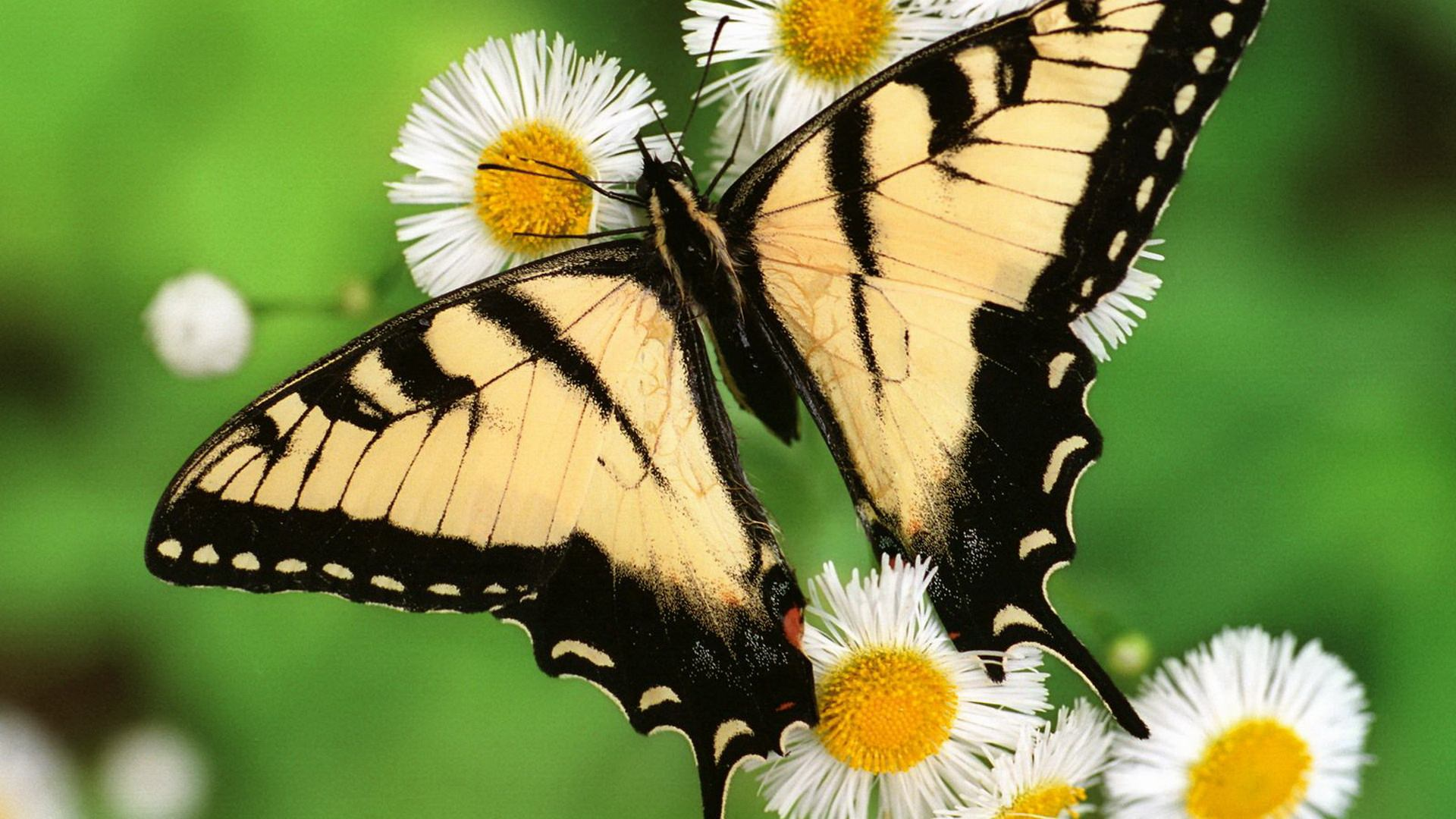 butterfly wings background