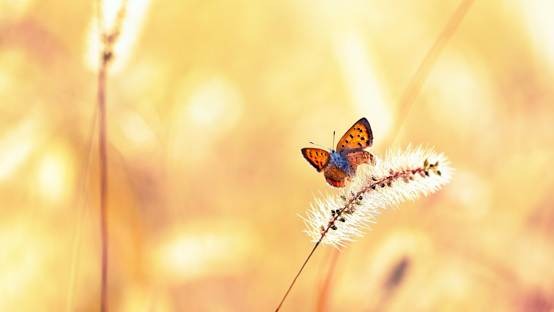 Butterfly on Grass Background