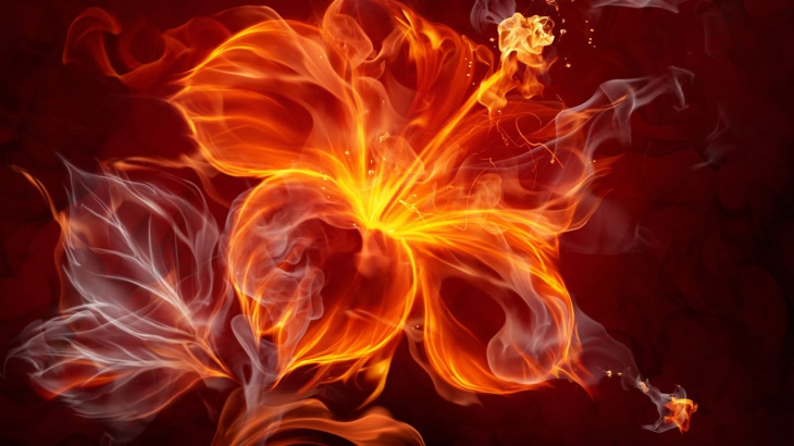 Cute Fire Flower Image