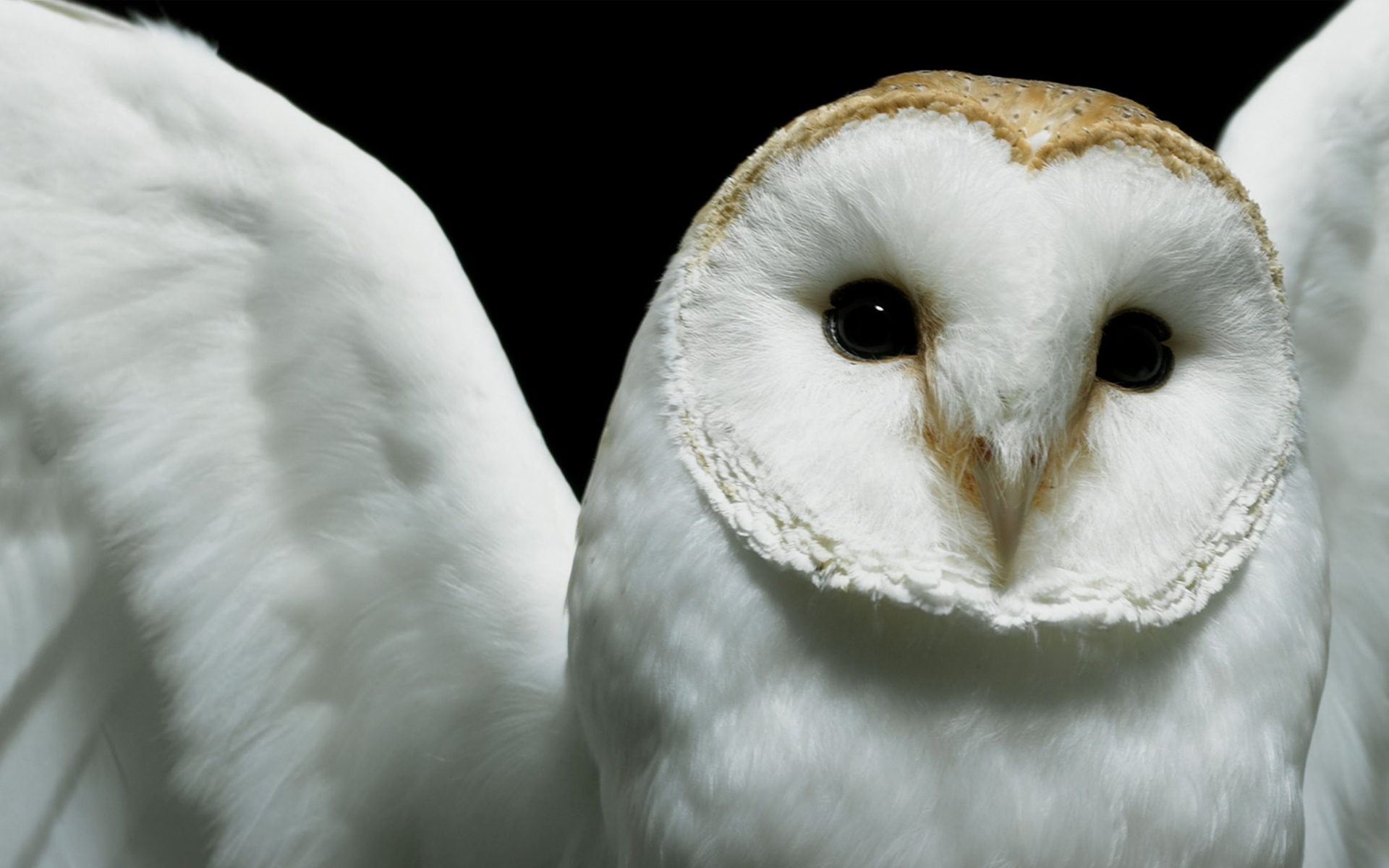 Cute Owl Background Image