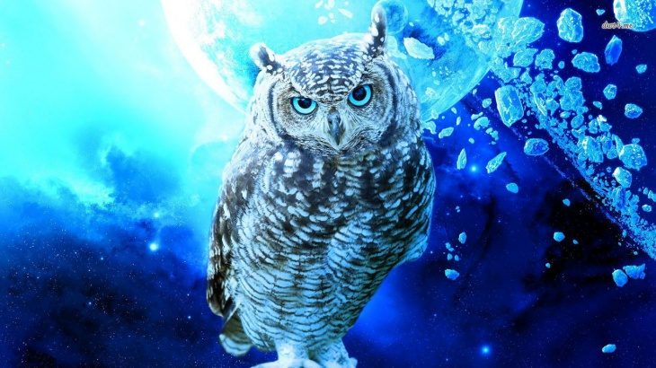 Free Download Owl Wallpaper