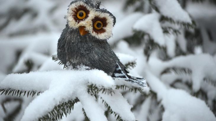 Bird Owl Image