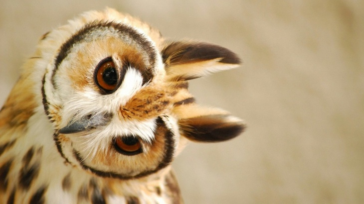 Awesome Owl Image