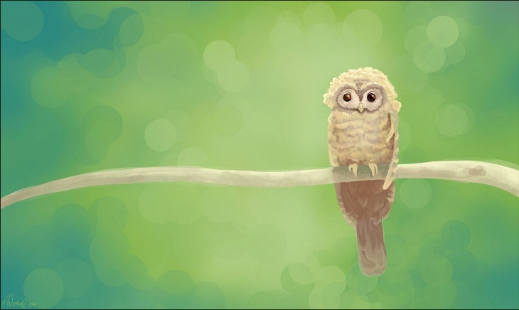 Tiny Owl Background
