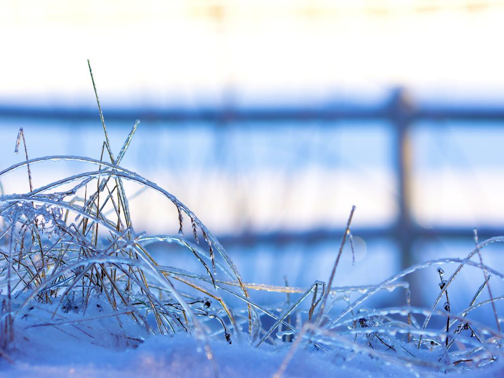 Frozen Grass Background