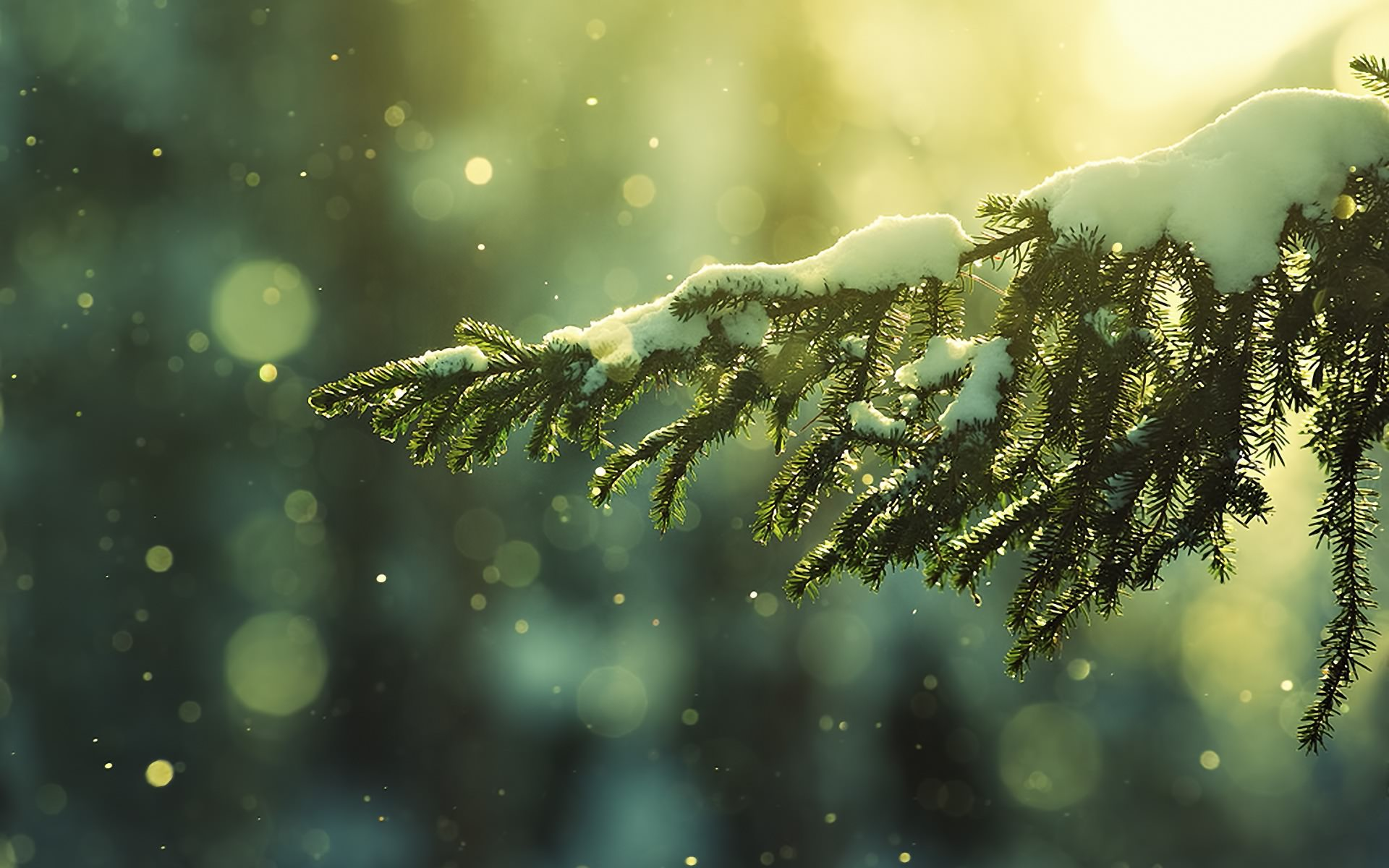 Frozen Tree Background