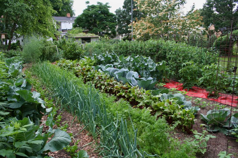 large vegetable kitchen garden design