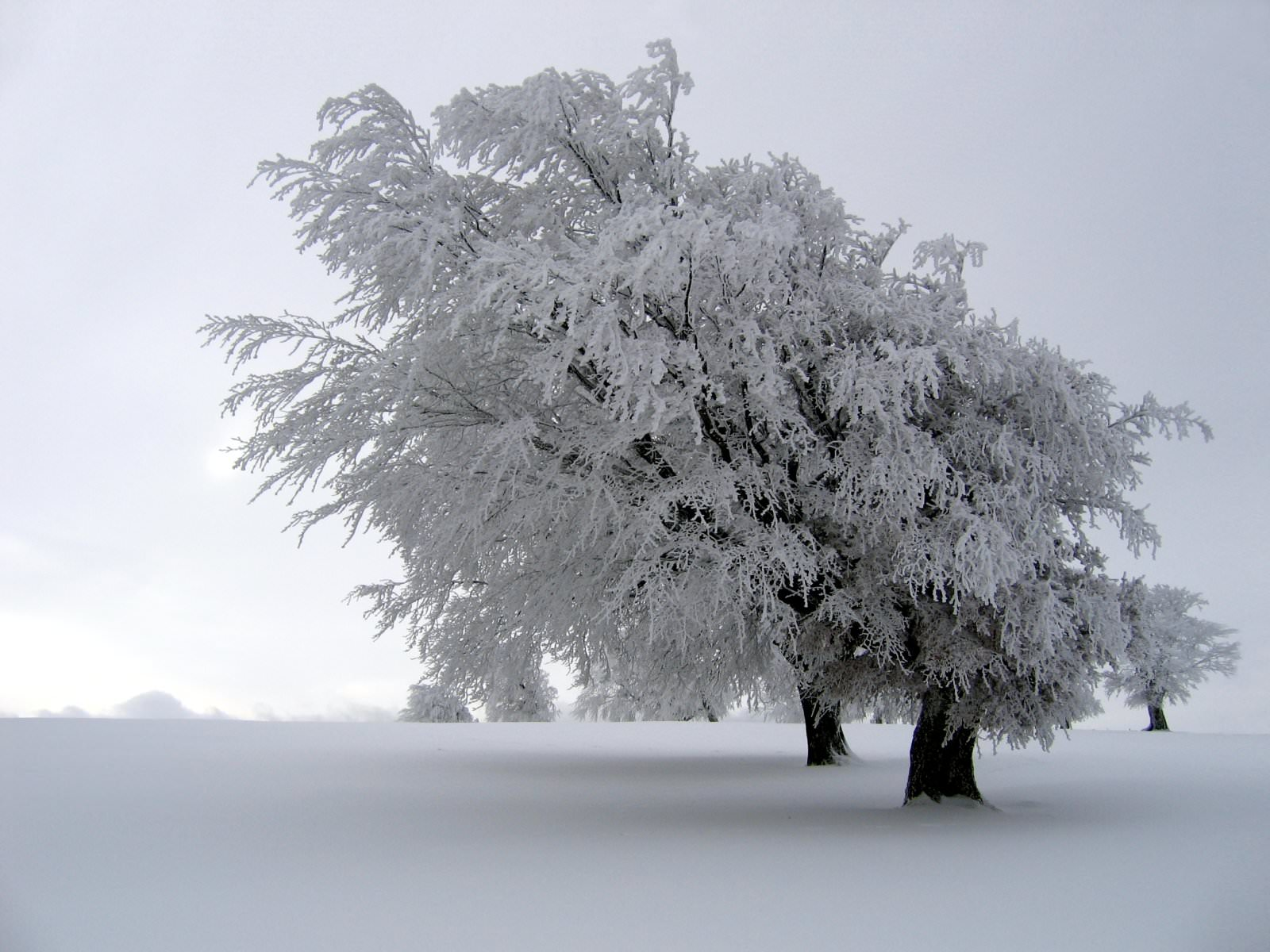 frozen tree background1