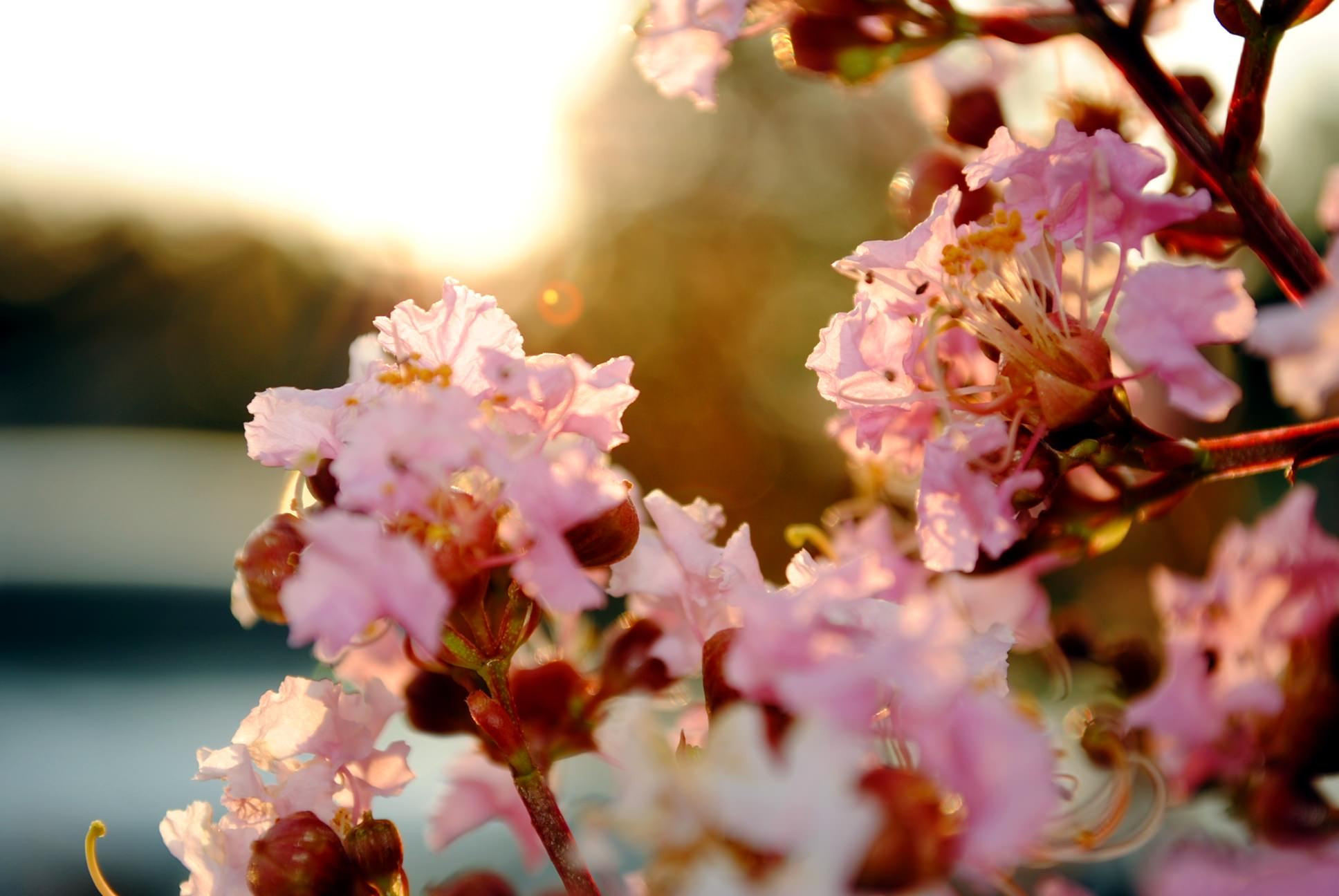 Simple Floral Wallpaper Backgrounds