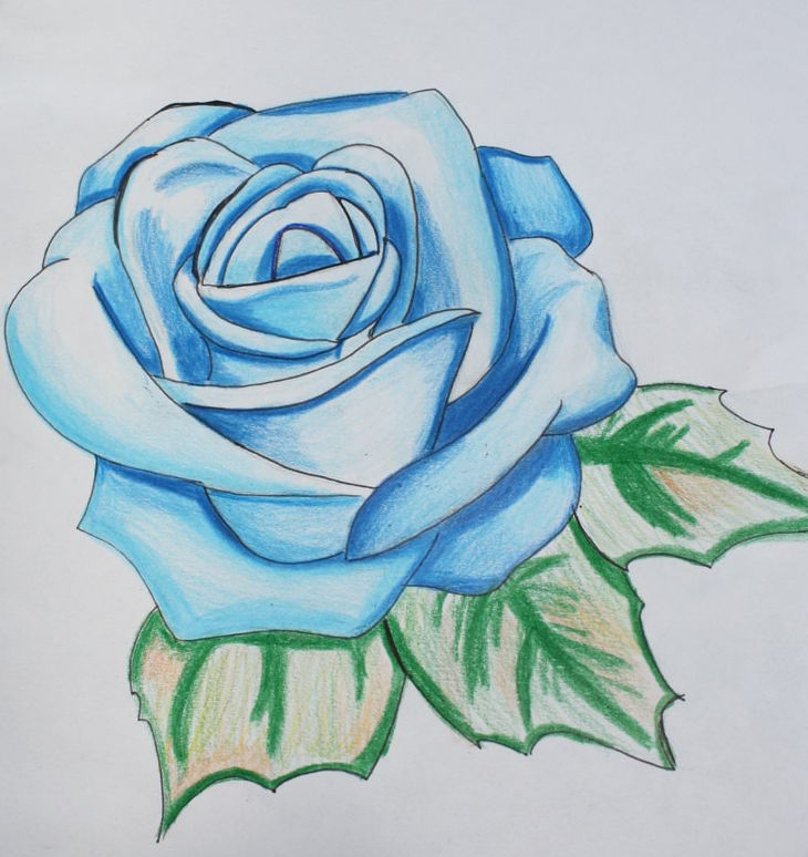 25 Rose Drawings Art Ideas Design Trends Premium
