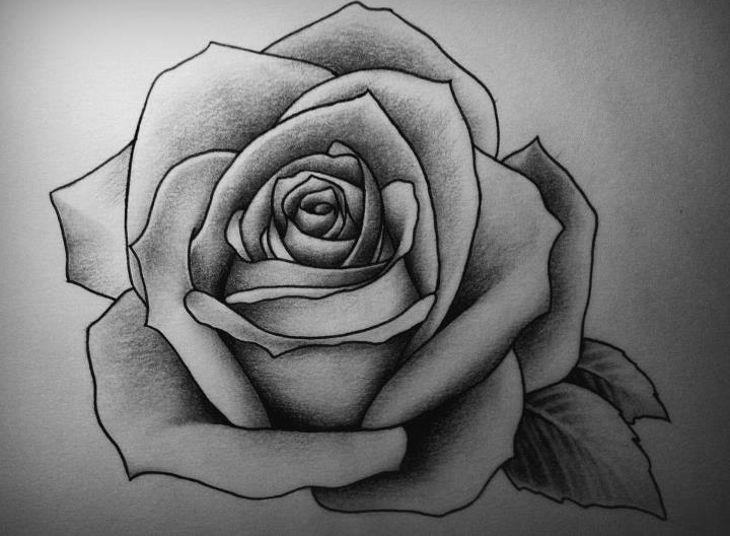 best rose drawing art1