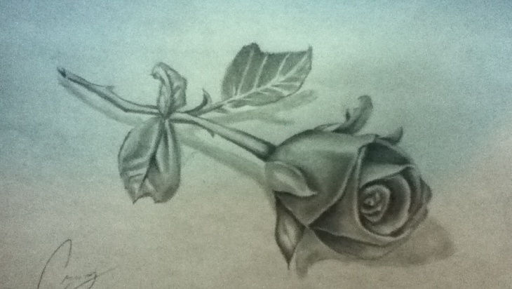 thorn rose bud drawing