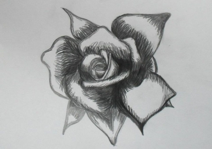 rose petal drawing art1