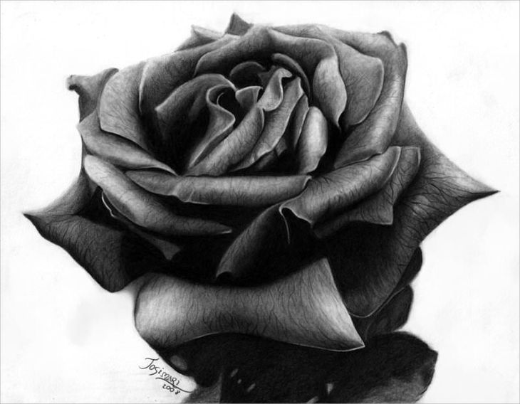 25+ Rose Drawings , Art Ideas