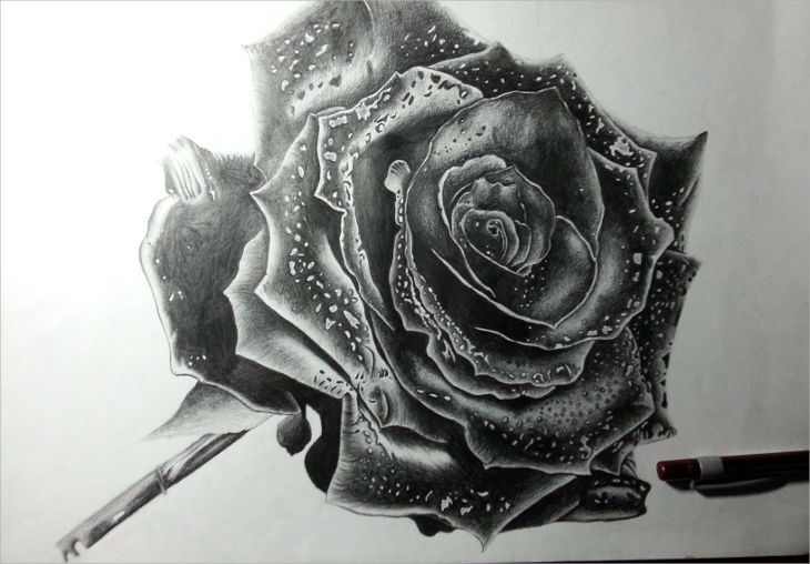 pretty black rose drawing