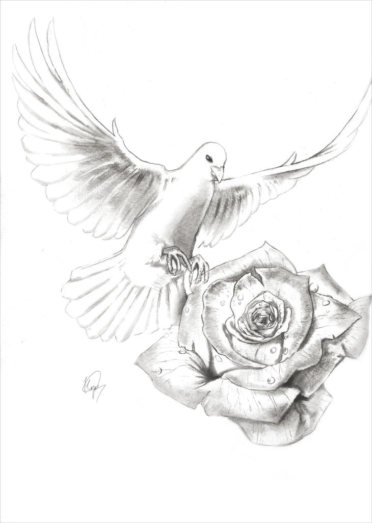 dove and rose pencil art