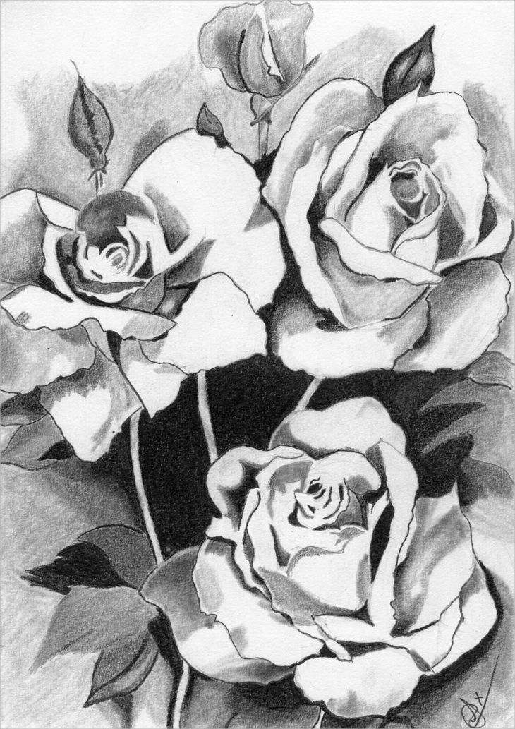 pencil sketch of bouquet rose