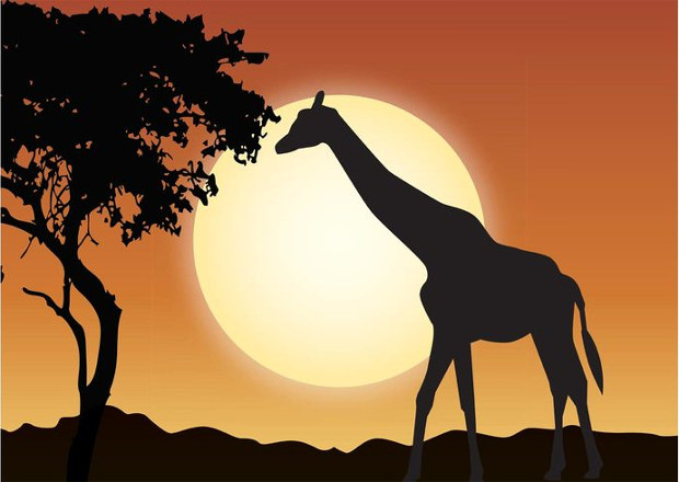 cool outdoor wildlife vector sunset
