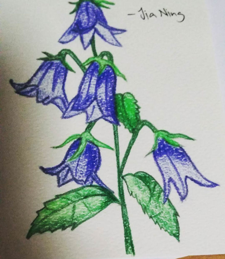 blue bells flower painting