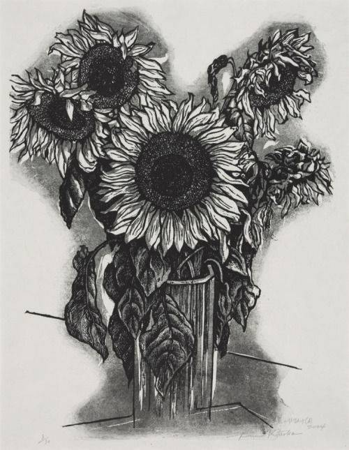 Dried Sunflower Drawing