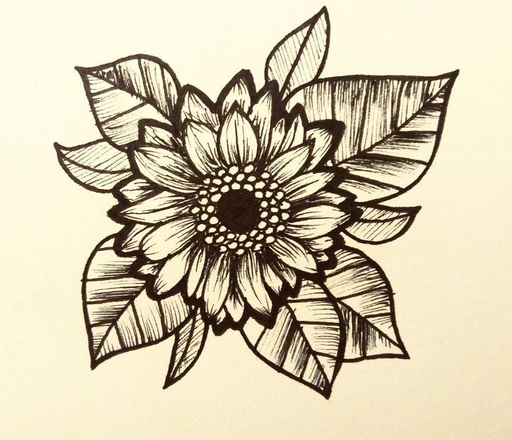 beautiful sunflower drawing