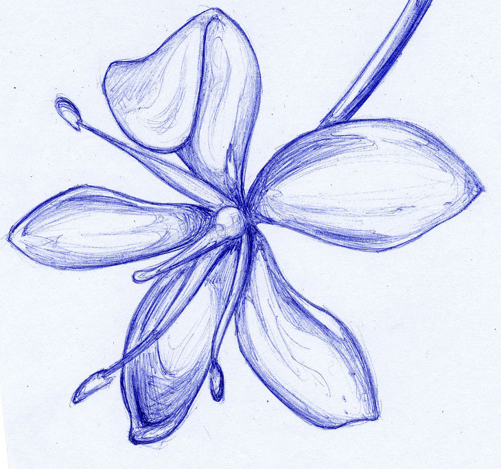 flower blue ballpoint drawing