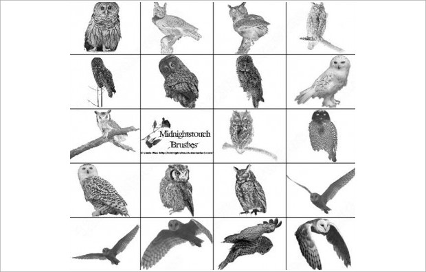Realistic set of Photoshop Owl Brushes