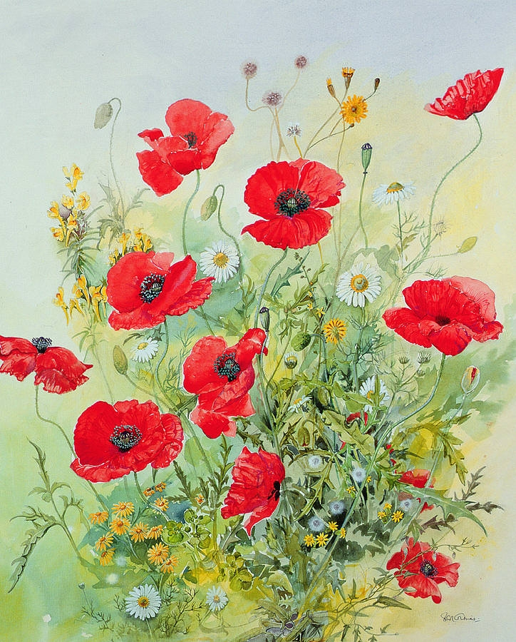 Poppies and Mayweed Flowers Painting