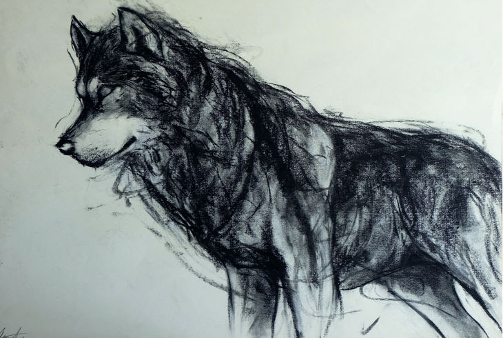 lovely wolf drawing1