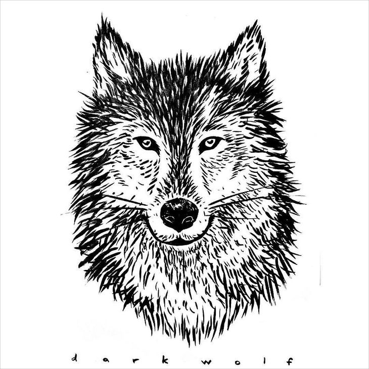 black and white wolf drawing1