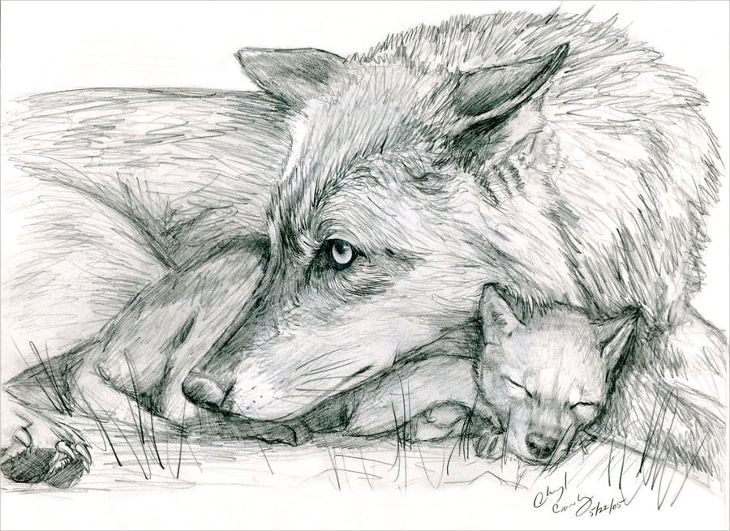 Beautiful Female and Kid Wolf Drawing