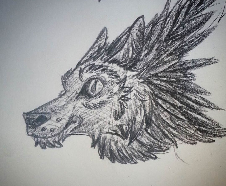 sketch wolf drawing