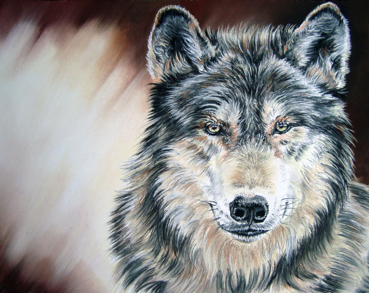 potrait of wolf drawing