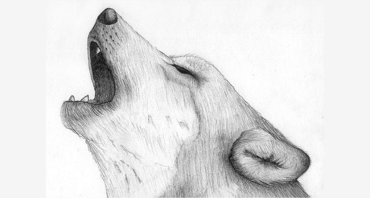 22+ Amazing Collection Of Wolf Drawing