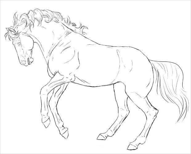 Rearing Horse Lineart